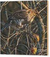 Partridge In An Apple Tree Wood Print