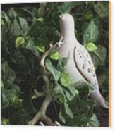 Partridge In The Ivy Wood Print