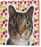 Party Animal - Smaller Cat With Confetti Wood Print