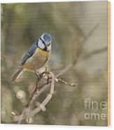 Parus Sitting On A Thin Branch Wood Print