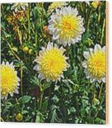 Pasadoble Dahlia Wood Print