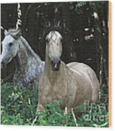 Paso Fino Mares Pay Attention Wood Print