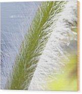 Pasqueflower Stem  Wood Print