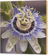 Passiflora Caerulea Wood Print