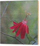 Passiflora Flower Wood Print