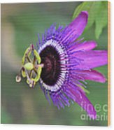 Passiflora Lavender Lady Wood Print