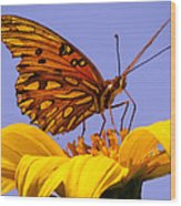 Passion Butterfly On The Mexican Sunflower Wood Print