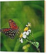Passion Butterfly Painted Wood Print