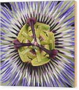 Passion Flower-0008 Wood Print