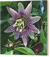 Passion Flower 4 Wood Print