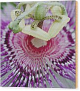 Passion Flower In Bloom Wood Print