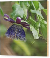 Passion Flower - Ruby Glow Wood Print