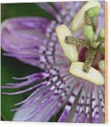Passion Flower Wood Print