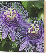 Passion Flowers Wood Print
