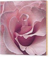 Passion Pink Rose Flower Wood Print
