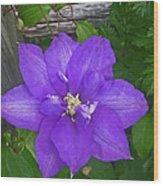 Passion Vine Wood Print