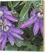 Passion Vine Flower Rain Drops Wood Print