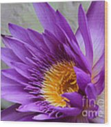 Passionate Purple Water Lily Wood Print
