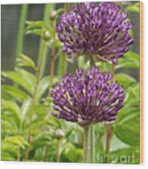 Passionately Purple Wood Print
