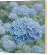 Pastel Blue Hydrangea Wood Print