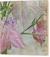 Pastel Columbines Wood Print