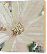 Pastel Daisy Photoart Wood Print
