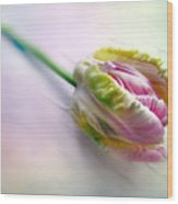 Pastel Parrot Tulip Wood Print