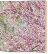 Pastel Pink Flowers Of Redbud Tree In Springtime  Wood Print by Lisa Russo
