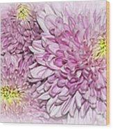 Pastel Pink Mums Wood Print