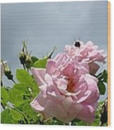 Pastel Pink Roses With Bee Wood Print