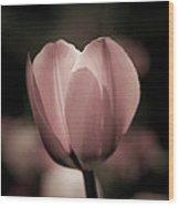 Pastel Pink Tulip In Spring Wood Print