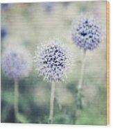 Pastel Purple Allium Bulbs Wood Print