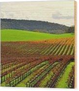 Pastoral Vineyards Of Asti Wood Print