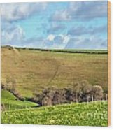 Pasture Land - Dorset Wood Print