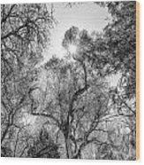 Patagonia Bw 4 Wood Print