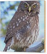 Patagonia Pygmy Owl Wood Print