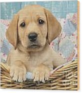 Patchwork Puppy Dp793 Wood Print by Greg Cuddiford