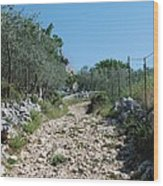 Path Among Olive Trees Wood Print