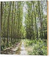 Path And Trees Wood Print