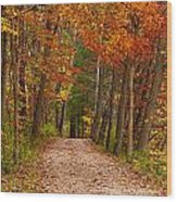 Path In A Fall Woods Wood Print