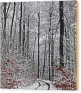 Path In A Forest In Winter In The Countryside  In Denmark Wood Print