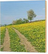 Path In Dandelion Meadow  Wood Print