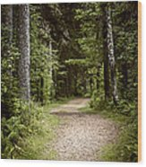 Path In Old Forest Wood Print