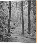 Path In The Foggy Forest Wood Print
