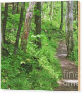 Path In The Forest Wood Print by Jill Lang
