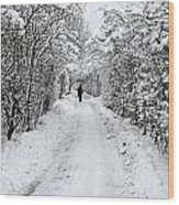 Path In The Snow In Winter In Denmark Wood Print