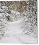 Path In Winter Forest Wood Print by Elena Elisseeva