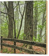 Path Into The Forest Wood Print by Debra and Dave Vanderlaan