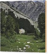 Path Of Life Ruby Mountains Stock Trail Wood Print