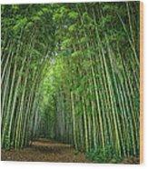 Path Through Bamboo Forest E139 Wood Print